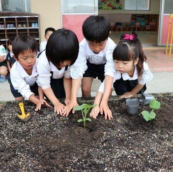 野菜を植えたよ♪